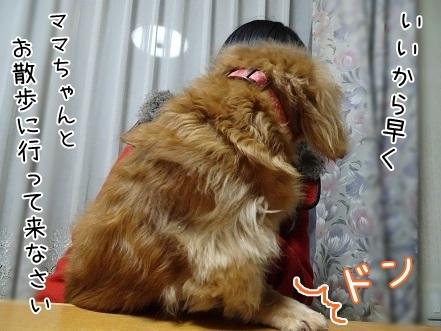 kinako6706.jpg
