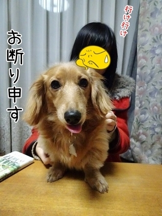 kinako6708.jpg