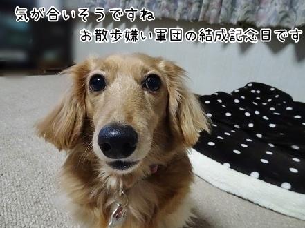 kinako6711.jpg
