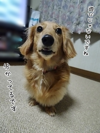 kinako6712.jpg