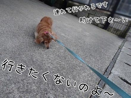 kinako6715.jpg