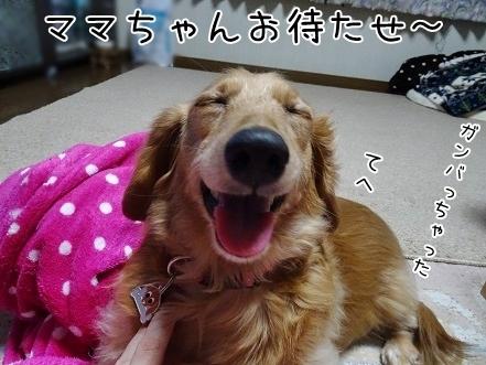 kinako6728.jpg