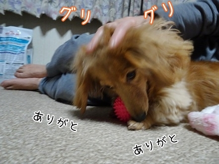 kinako6736.jpg