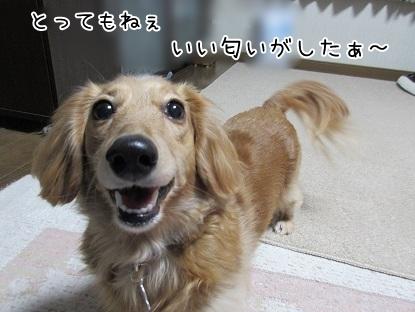 kinako6747.jpg