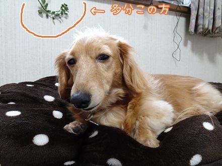 kinako6781.jpg