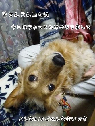 kinako6785.jpg