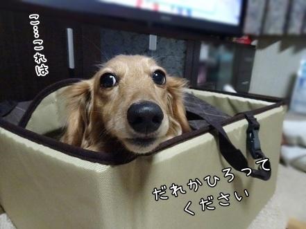 kinako6790.jpg
