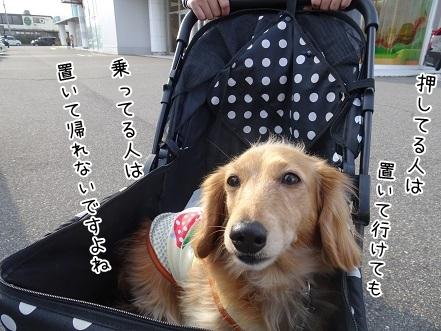 kinako6980.jpg