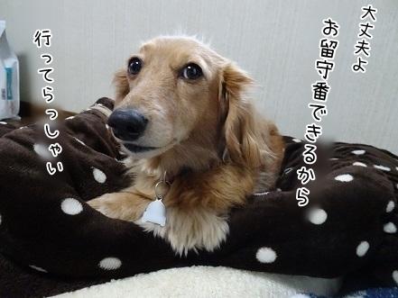 kinako6983.jpg