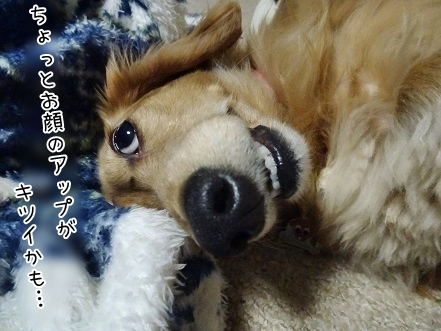 kinako6990.jpg