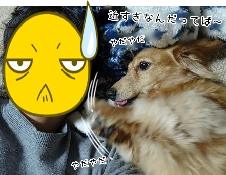 kinako6994.jpg