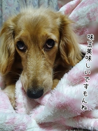 kinako7003.jpg