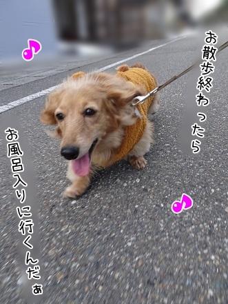 kinako7007.jpg