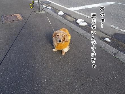 kinako7008.jpg