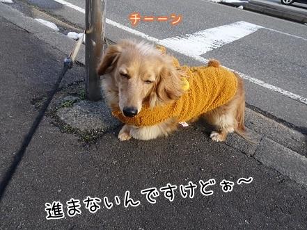 kinako7011.jpg