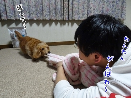 kinako7033.jpg
