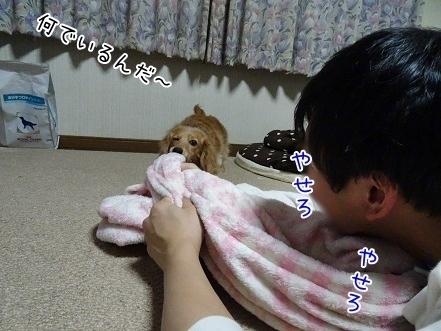 kinako7034.jpg