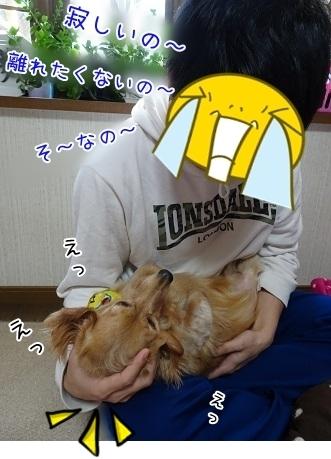 kinako7044.jpg