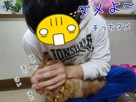 kinako7047.jpg