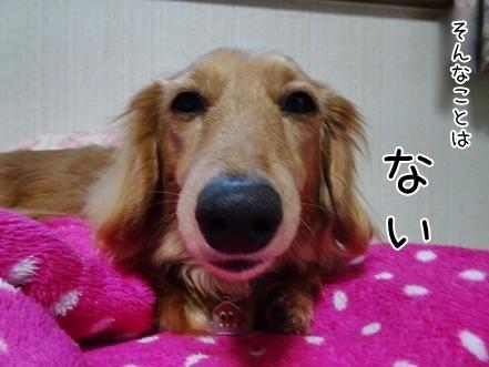 kinako7050.jpg
