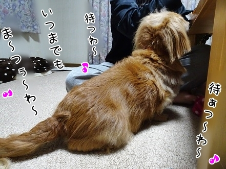 kinako7067.jpg