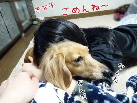 kinako7076.jpg