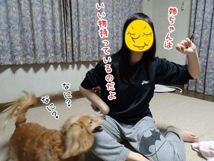 kinako7079.jpg