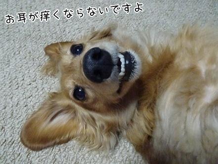 kinako7118.jpg
