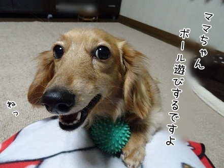 kinako7122.jpg