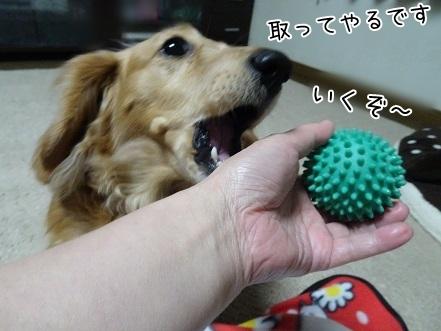 kinako7123.jpg