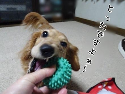 kinako7124.jpg