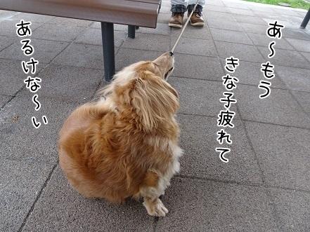 kinako7130.jpg