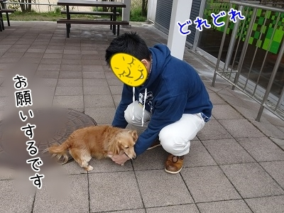 kinako7132.jpg