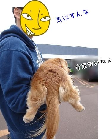 kinako7133.jpg