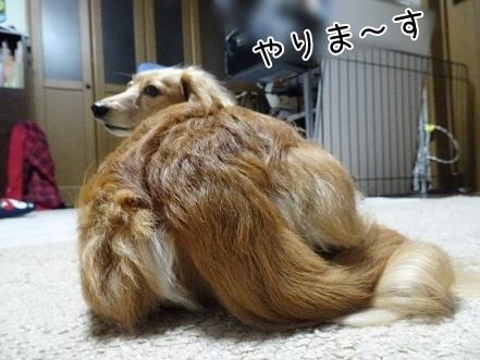 kinako7261.jpg