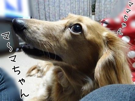 kinako7263.jpg