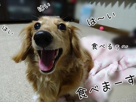 kinako7287.jpg