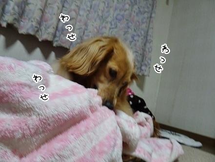 kinako7298.jpg