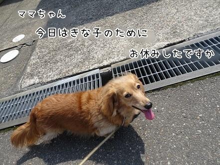 kinako7305.jpg