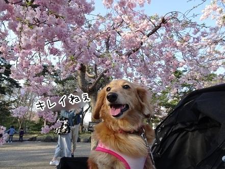 kinako7329.jpg
