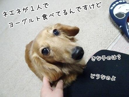 kinako7349.jpg