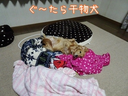 kinako7376.jpg