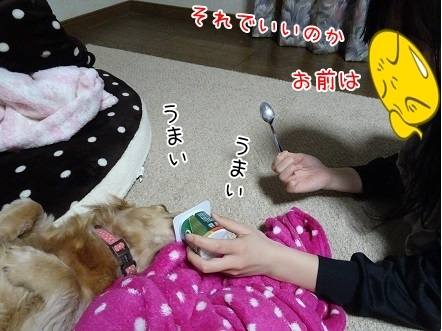 kinako7381.jpg