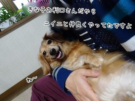 kinako7410.jpg