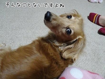 kinako7415.jpg