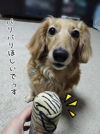 kinako7421.jpg