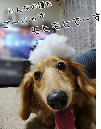 kinako7426.jpg