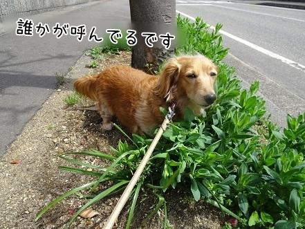 kinako7428.jpg