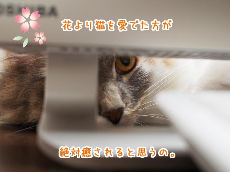 P4070067_2.jpg
