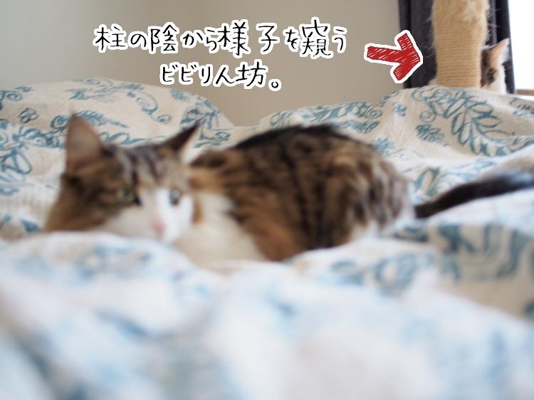 P4230164_.jpg
